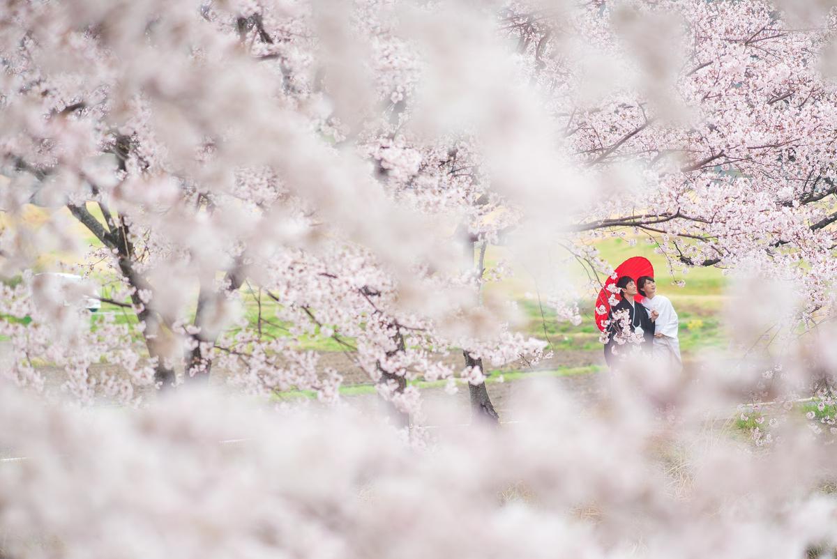 桜ウエディングロケーション2018