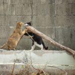 沖縄の猫たち。